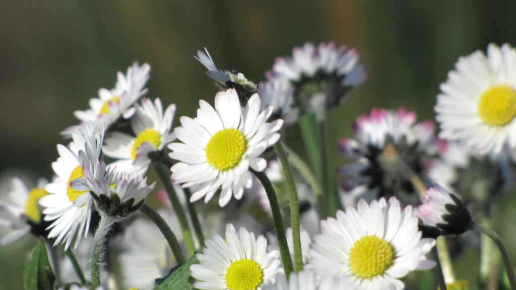 Daisies Cotswolds Self Catering