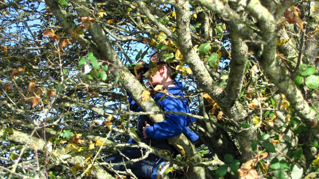 Tree climbing Cotswolds Self Catering