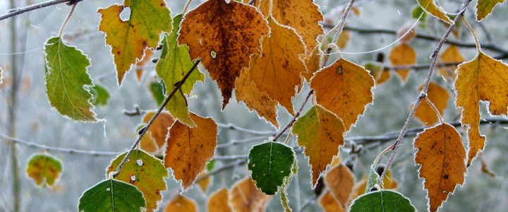 A beautiful frosty morning