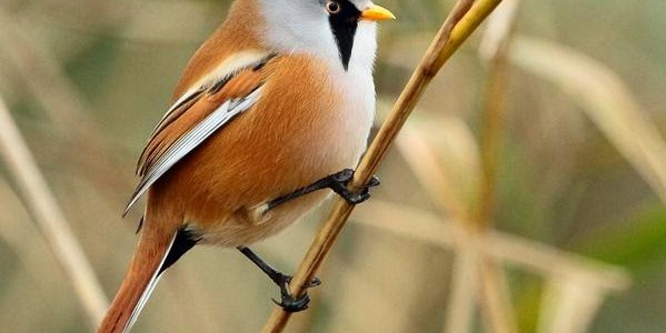 Fabulous bird watching in Cotswold Water Park