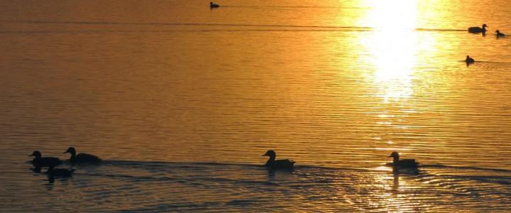 Sunday SunriseA sunrise from the archives this morning