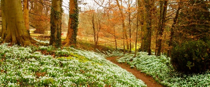 Secret Snowdrops in the Cotswolds