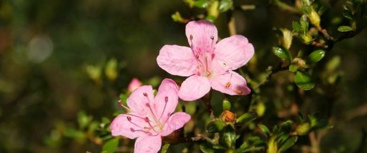 Spring at Westonbirt Arboretum