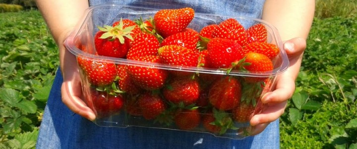Have you picked strawberries yet this year?