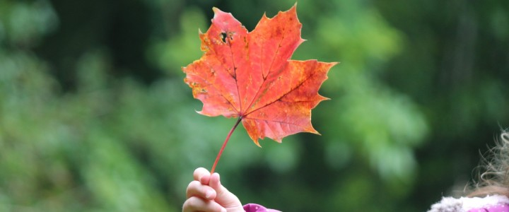 The 10 best ways to enjoy Autumn at Westonbirt