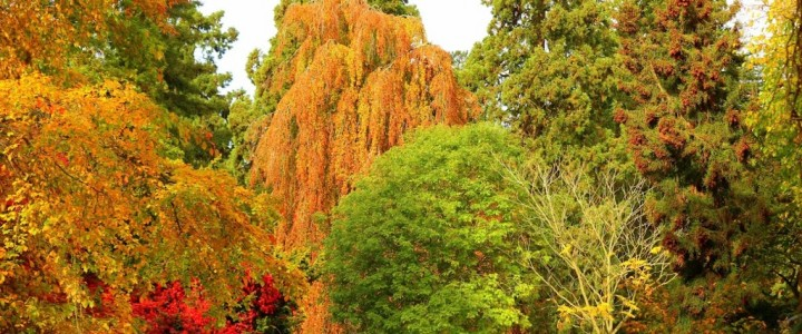 Batsford Arboretum, Moreton-in-Marsh, Cotswolds