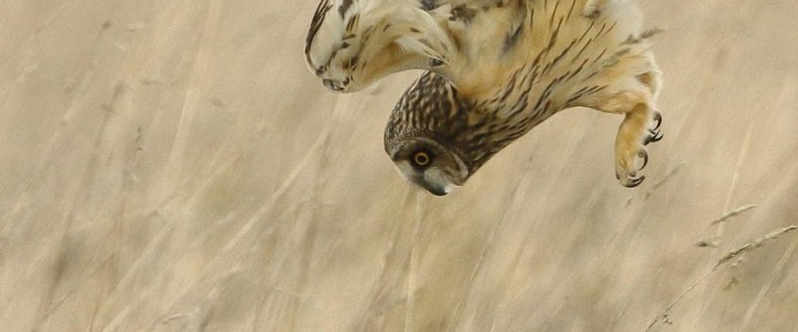 One of the best places to see birds of prey in the country