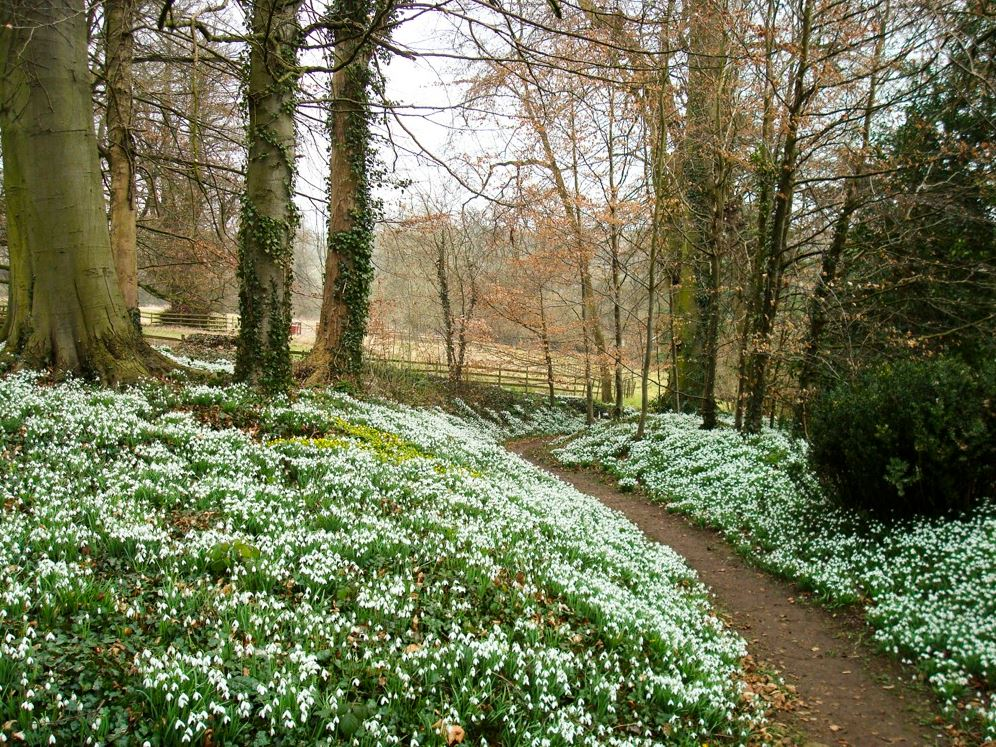 Cerney Gardens Snowdrops