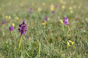 Clattinger Farm Wild Flower Meadow