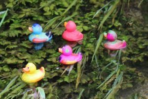 Lower Mill Estate Duck Race